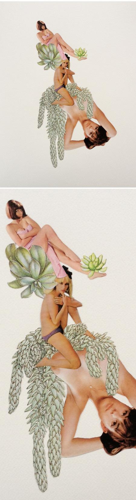 dirtygarden_succulent